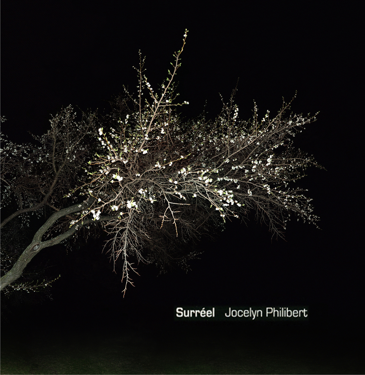 jocelyn philibert Des arbres dans la nuit<br />Trees in the Night